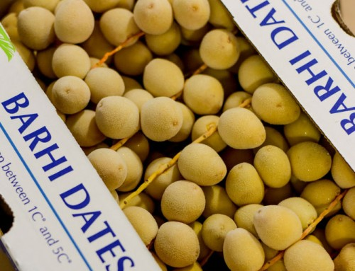 Desert Fruit Namibia confident of good offering for Fresh Date Harvest